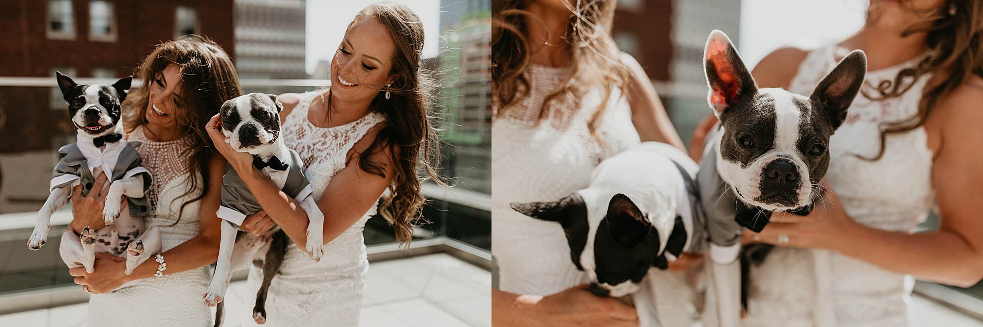 PIttsburgh Wedding Photography, Pittsburgh Gay Wedding, Dogs in suits